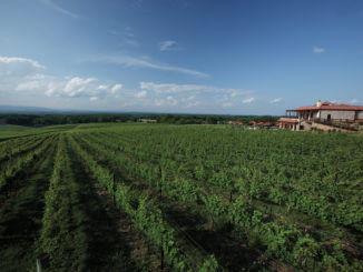 Raffaldini Vineyards & Winery